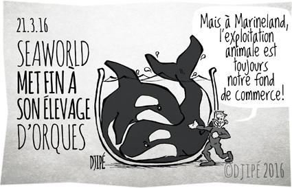 caricatures, dauphins, dessin de presse, dessin satirique, dessinateur, Djipé, humour noir, Marineland, orca, orques, SeaWorld, Tilikum, Unna,